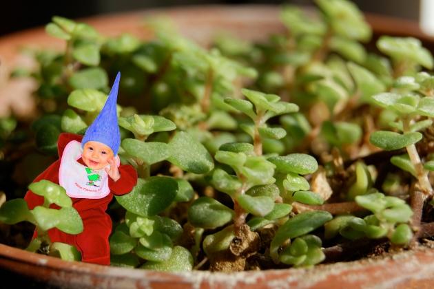 091108_garden-gnome